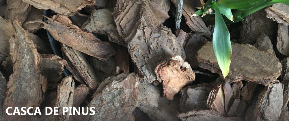 Casca de Pinus Campinas