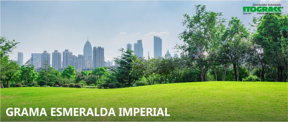 Grama Esmeralda Imperial Campinas